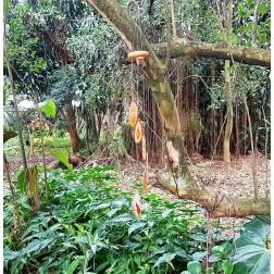 Sino dos ventos Ágata laranja ( 30 cm )