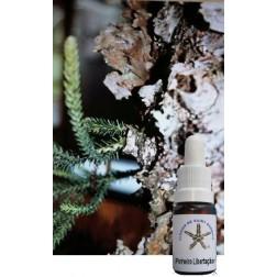 Floral de Saint Germain Pinheiro Libertação  10 ML
